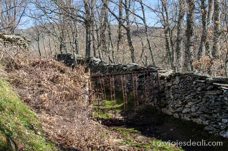 camino junto a valla de piedra y árboles senderismo fácil en la sierra del rincón