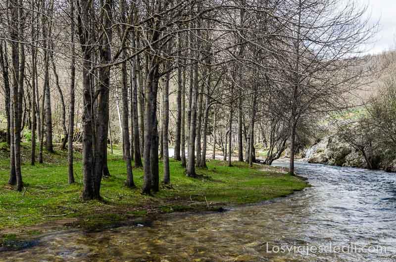 árboles junto al río que hace curva senderismo fácil en la sierra del rincón