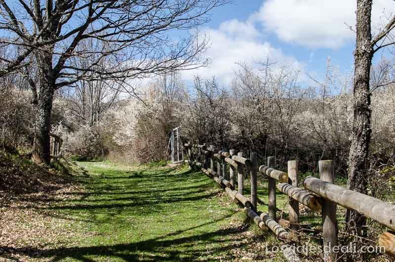 camino junto a valla de madera entre árboles en la sierra del rincón madrid