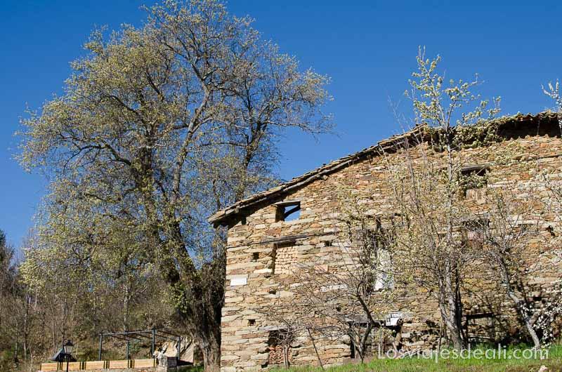casa de piedra con gran árbol al lado senderismo fácil en la sierra del rincón de madrid