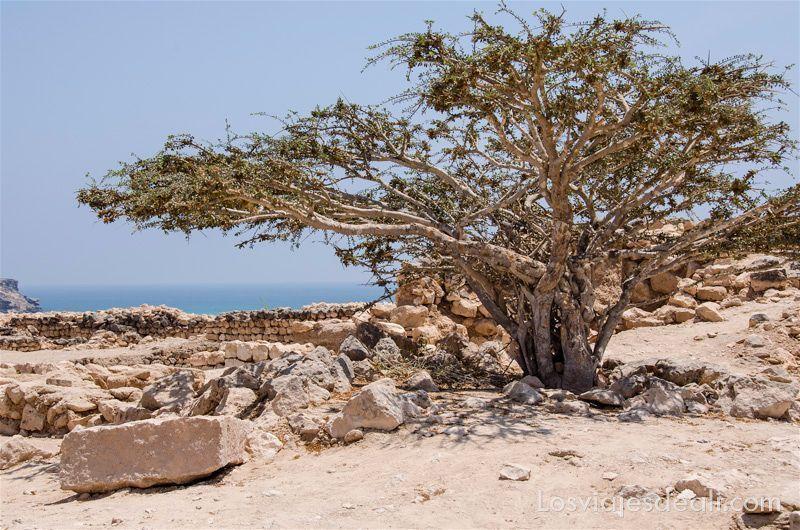 visitas que hacer cerca de salalah