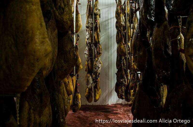 jamones colgados formando pasillos en un secadero gastronomía extremeña