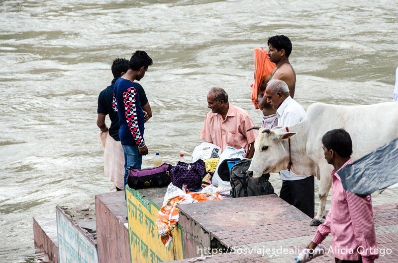 hombres y una vaca en la orilla del río rishikesh india