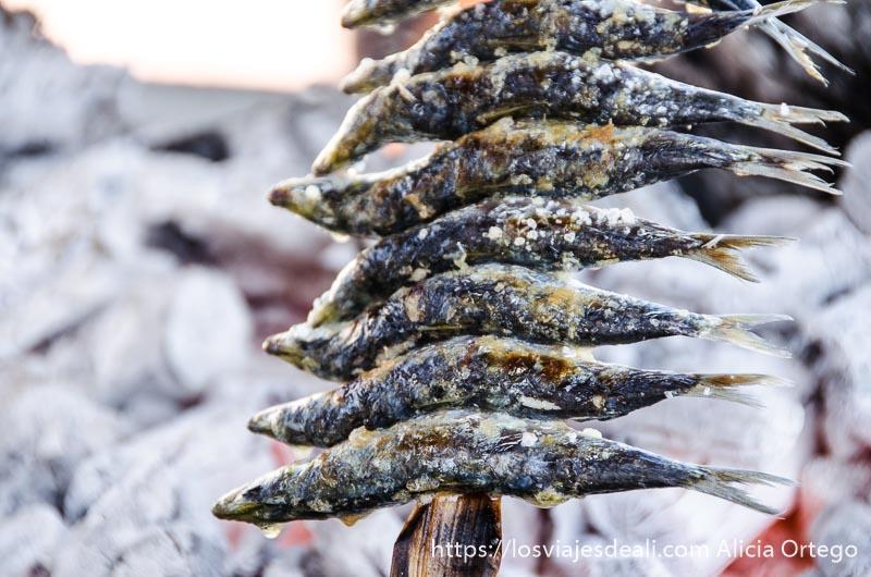 sardinas ensartadas en un palo sobre las brasas un fin de semana diferente en torremolinos