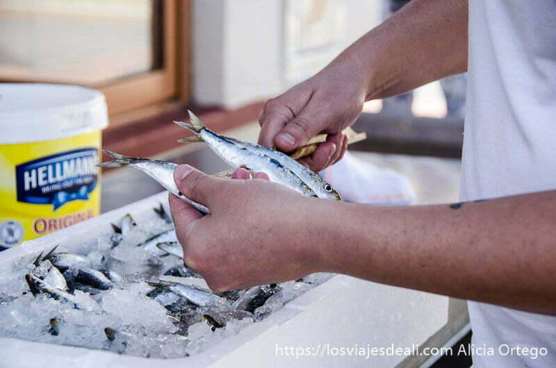 ensartando sardinas en un espeto un fin de semana diferente en torremolinos