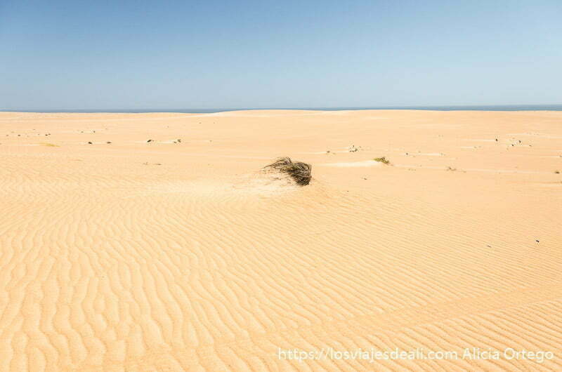 dunas con ondulaciones y un matorral en el centro desiertos de omán