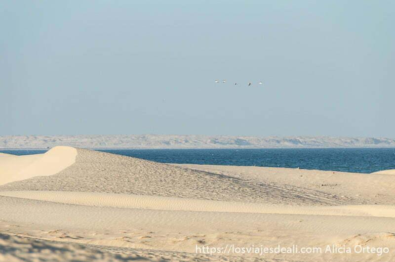 dunas de color amarillo claro y mar de profundo azul desiertos de oman