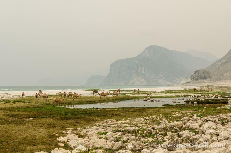 itinerarios para viajar en Omán playa de Salalah