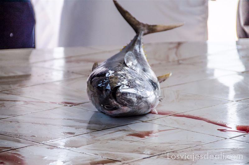 atun en mercado de pescado en Omán