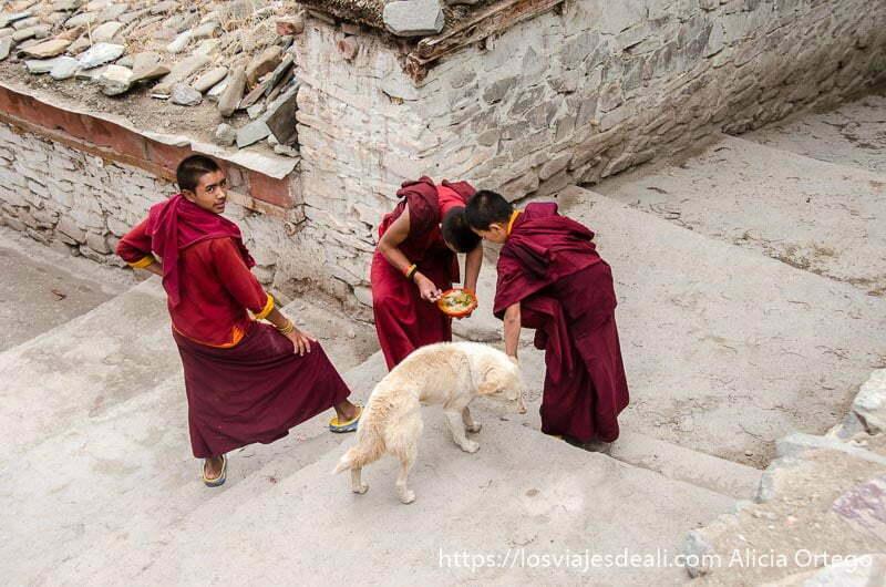 niños monje dando las sobras de la comida a un perro valle del indo