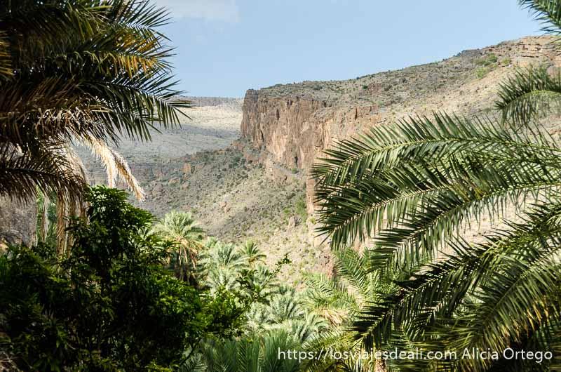 vista de la cordillera al hajar desde el oasis con muchas palmeras