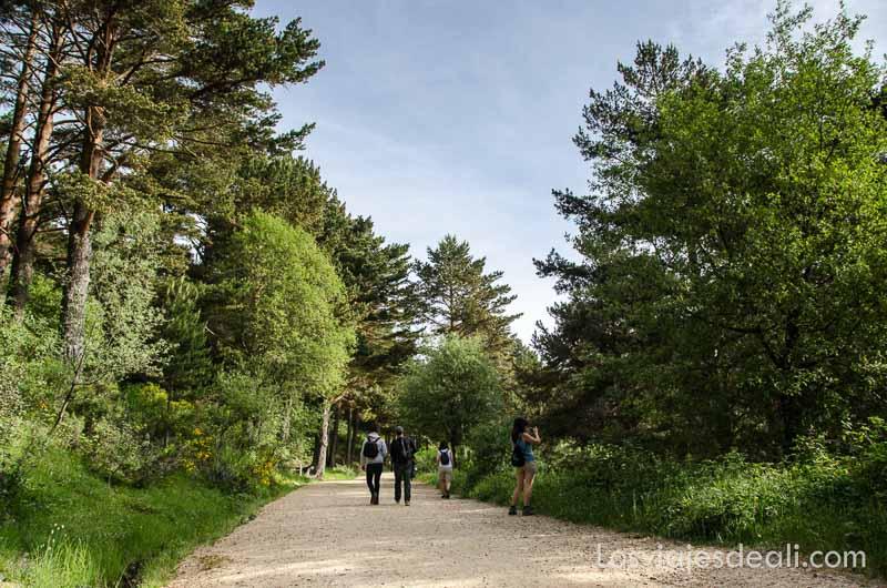 camino de la sierra entre árboles un fin de semana en la sierra de madrid