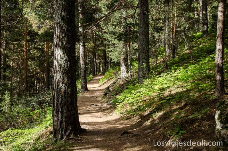 camino entre pinos y helechos un fin de semana en la sierra de madrid