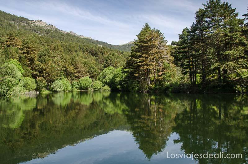pantano de la sierra de madrid donde se reflejan los árboles