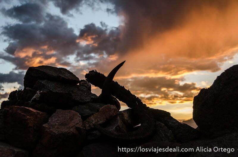 anochecer con roca y cuernos de animal en contraste trekking cerca de leh