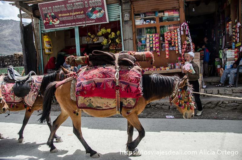 mula con manta de color rojo y bordados pueblos de cachemira