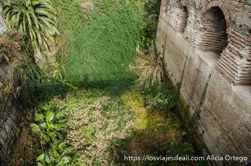 foso lleno de vegetación visita a herculano