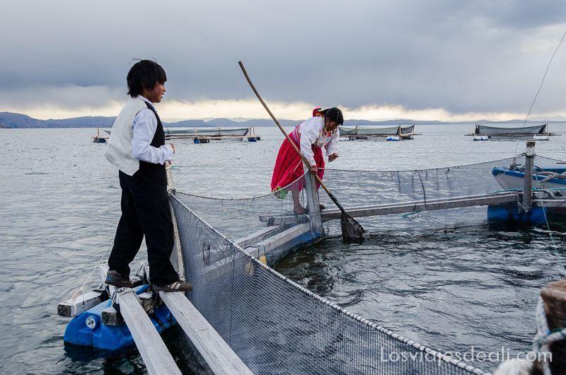 piscifactoría titicaca península de capachica