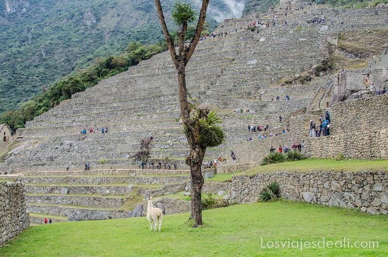 plaza de Machu Picchu