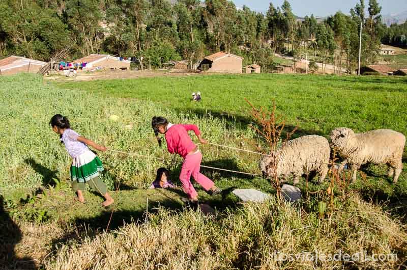 niñas tirando de cuerda para guiar a dos carneros en comunidad humacchuco peru los viajes y el tiempo