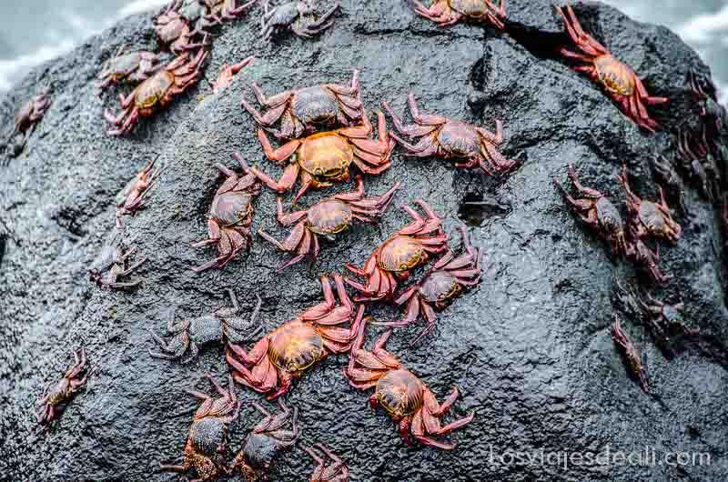 fauna y flora de galapagos zapayas_