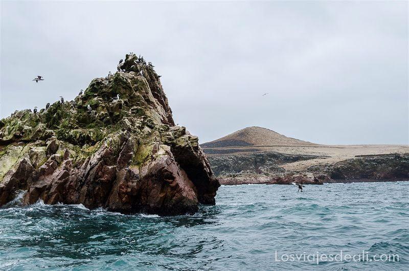 roca bañada por el mar con musgo verde y fragatas posadas
