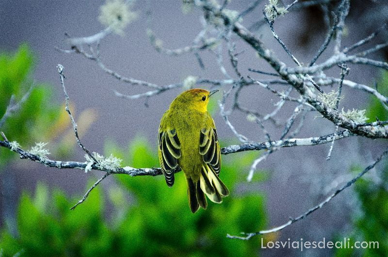 pájaro laguna villamil en isla isabela