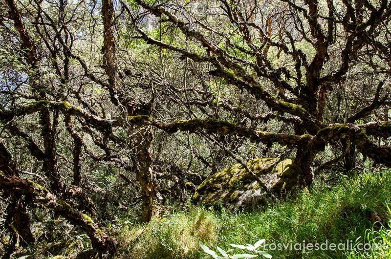 parque nacional de huascaran corteza bosques