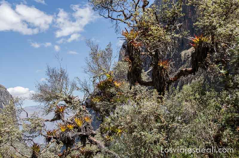 parque nacional de huascaran corteza bromelias