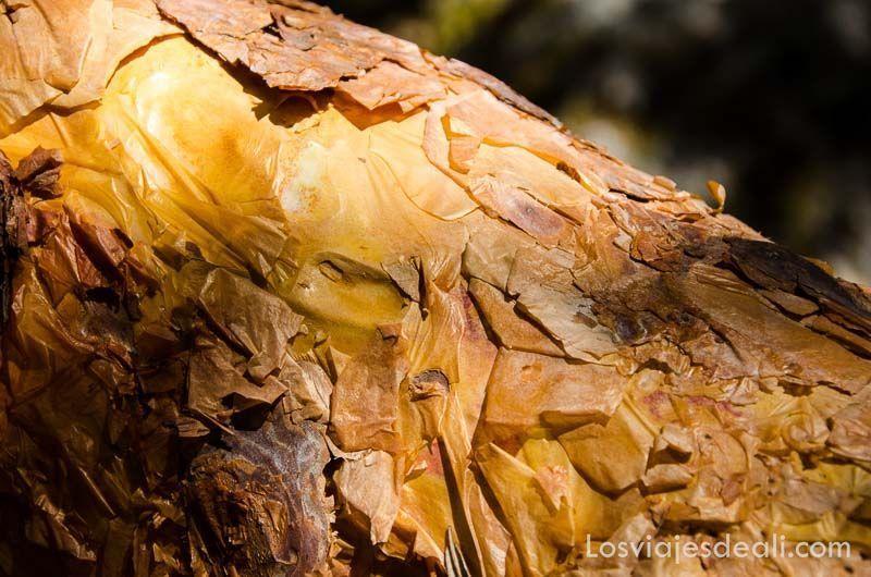parque nacional de huascaran corteza queñua