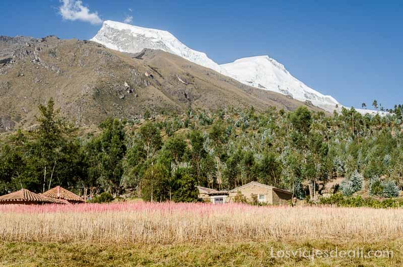campo de quinoa en comunidad humacchuco