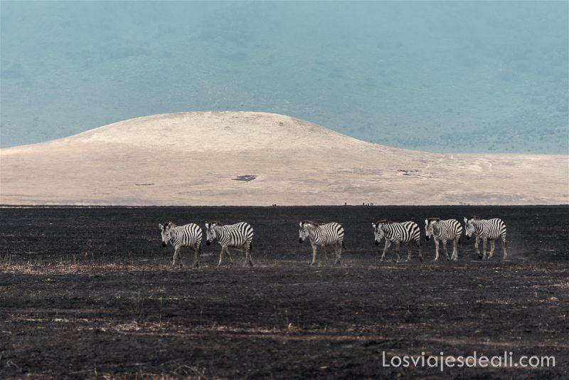 cráter de Ngorongoro cebras al amanecer