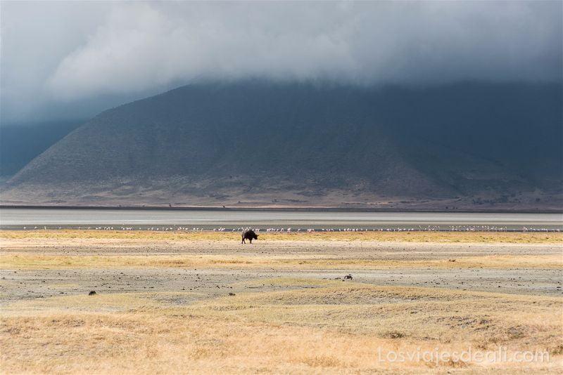 cráter de Ngorongoro lago salado