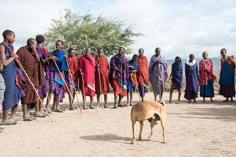 danza de tribu Masai en manyatta