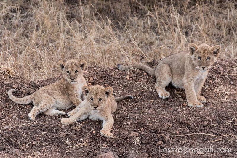 imagenes y sensaciones de Kenia y Tanzania cachorros