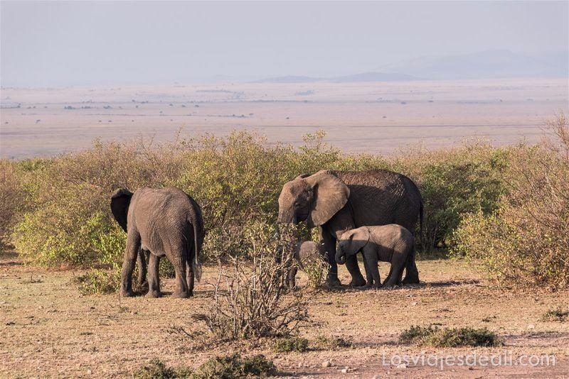 imagenes y sensaciones de Kenia y Tanzania elefantes