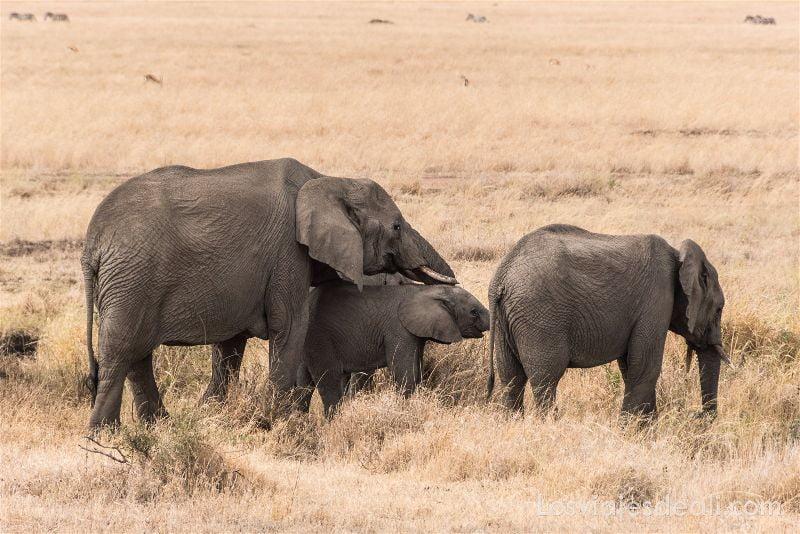 visita al parque nacional Serengueti elefantes