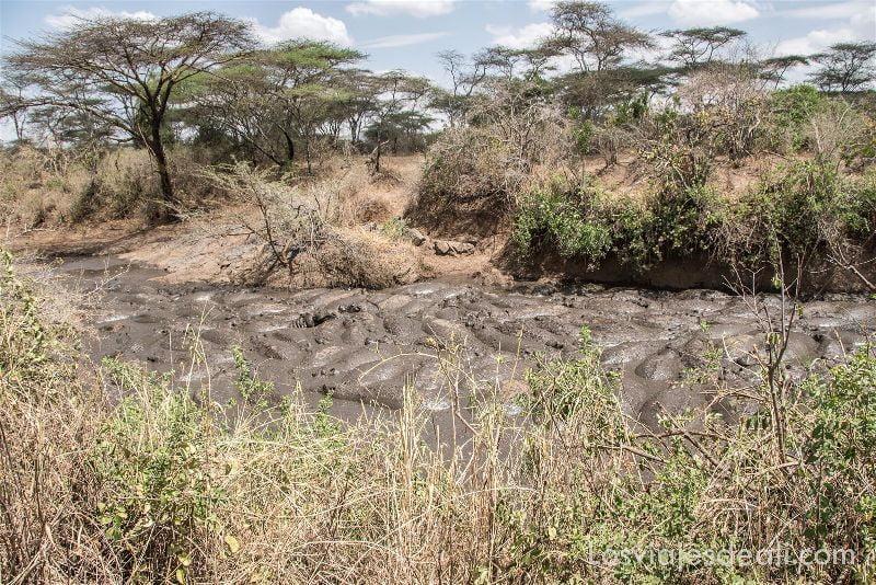 visita al parque nacional Serengueti hipopótamos