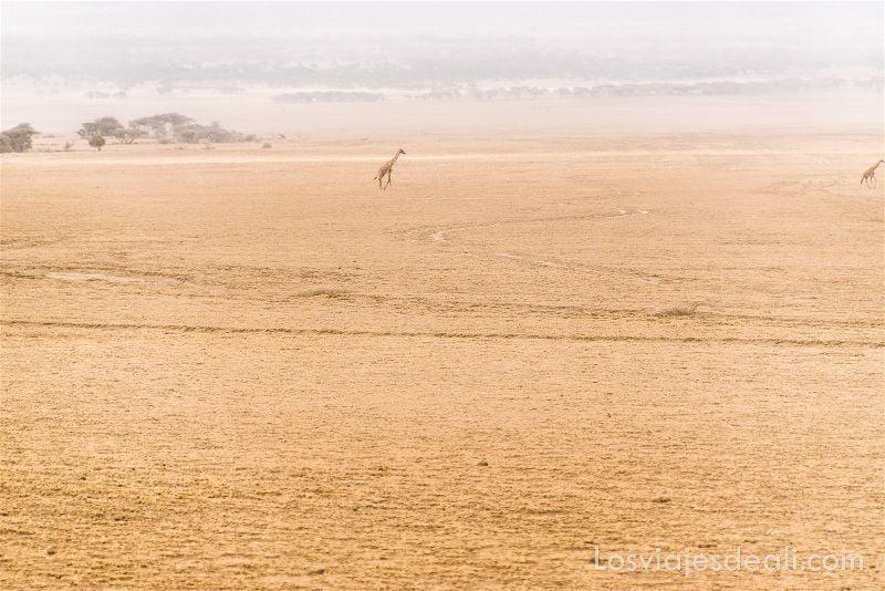 sabana africana con jirafa al fondo en Serengueti