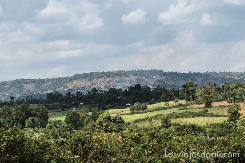 LAGO VICTORIA campos de cultivo
