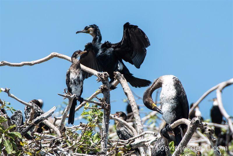 LAGO VICTORIA isla de los pájaros