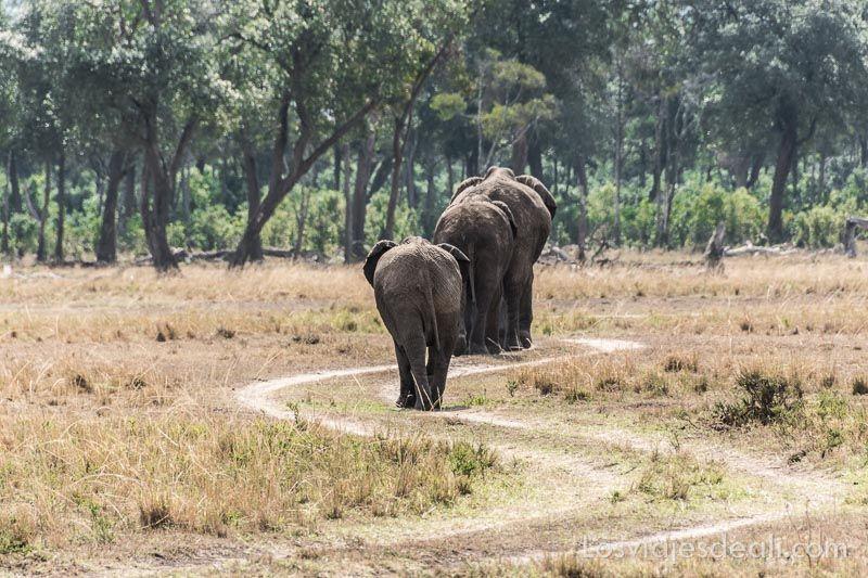 dos días en masai mara elefantes