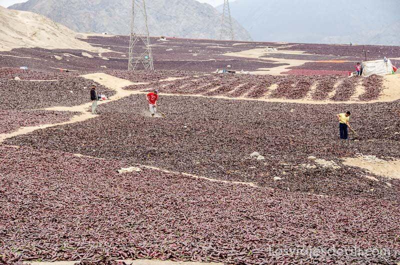 secando pimientos en perú