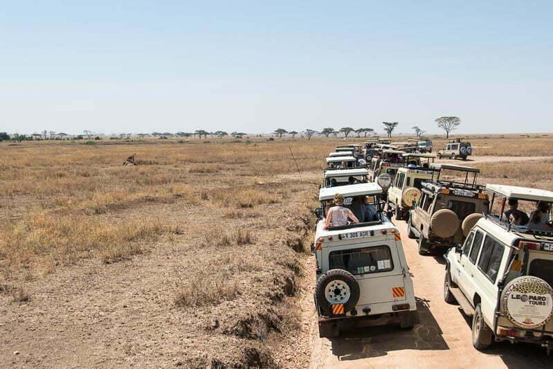 fila de coches 4x4 en serengueti para ver una leona