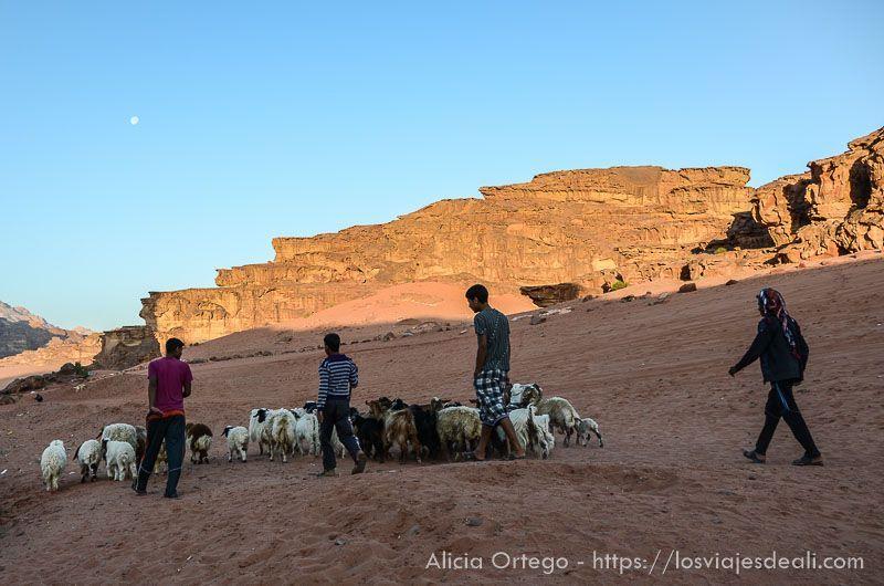 pastores de desierto de wadi rum
