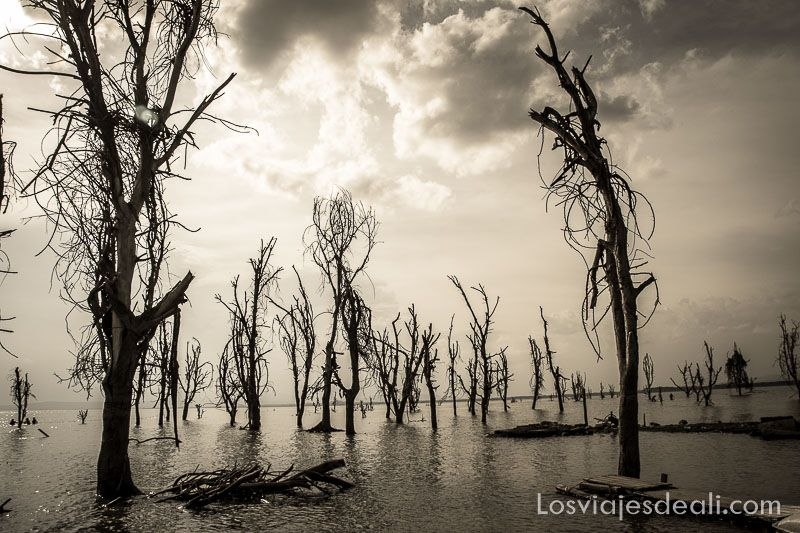 paisaje del Lago Naivasha