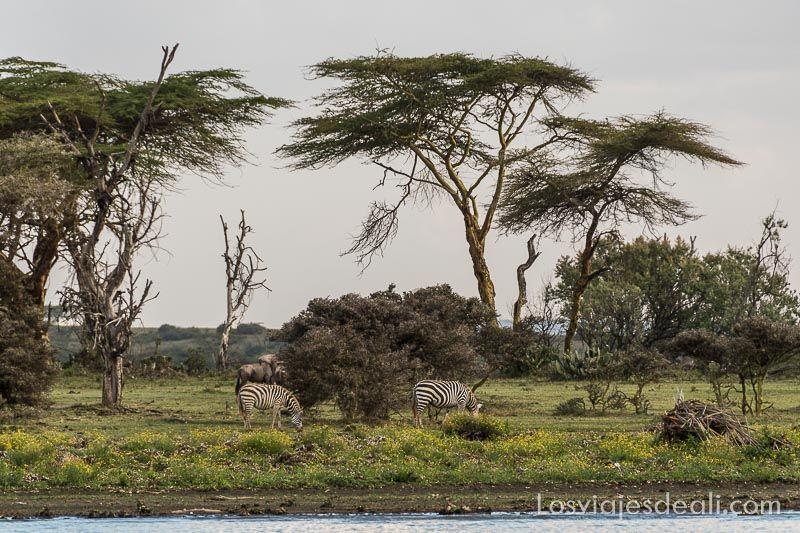 crescent island en el Lago Naivasha