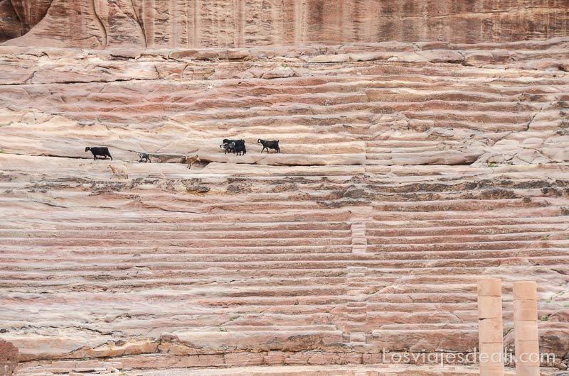 Petra teatro antiguo
