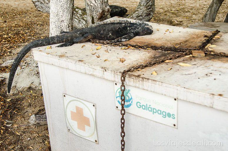 isla santa cruz tortuga bay puesto de socorro