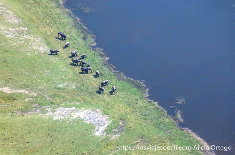 elefantes sobrevolar el delta del okavango